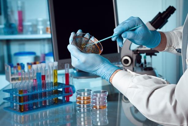 Cellestia Biotech Scientist taking sample from Petri dish